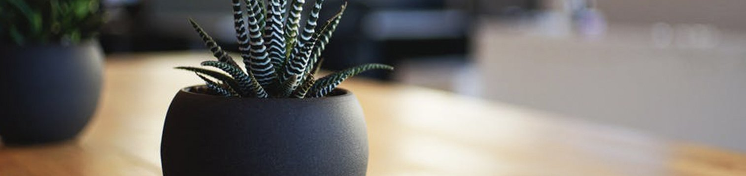 Plant on wooden table